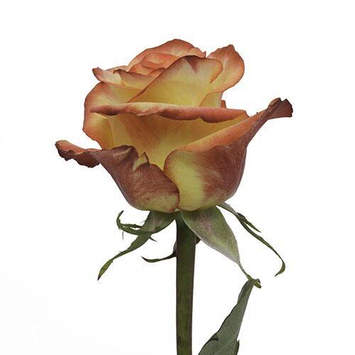 Цветы оптом на 8 марта красноярск купить цветы выгодно